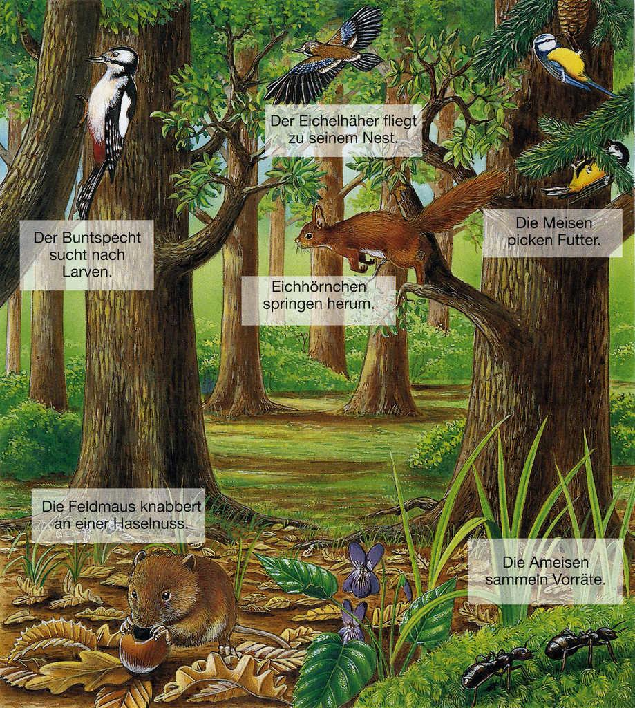 Themenstation 11.) Tiere des Waldes
