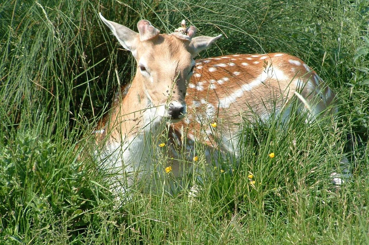 11) Tiere des Waldes