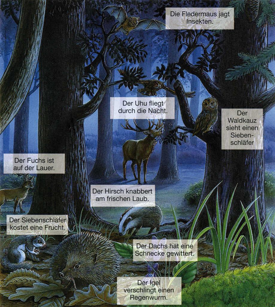 Tiere des Waldes bei Nacht