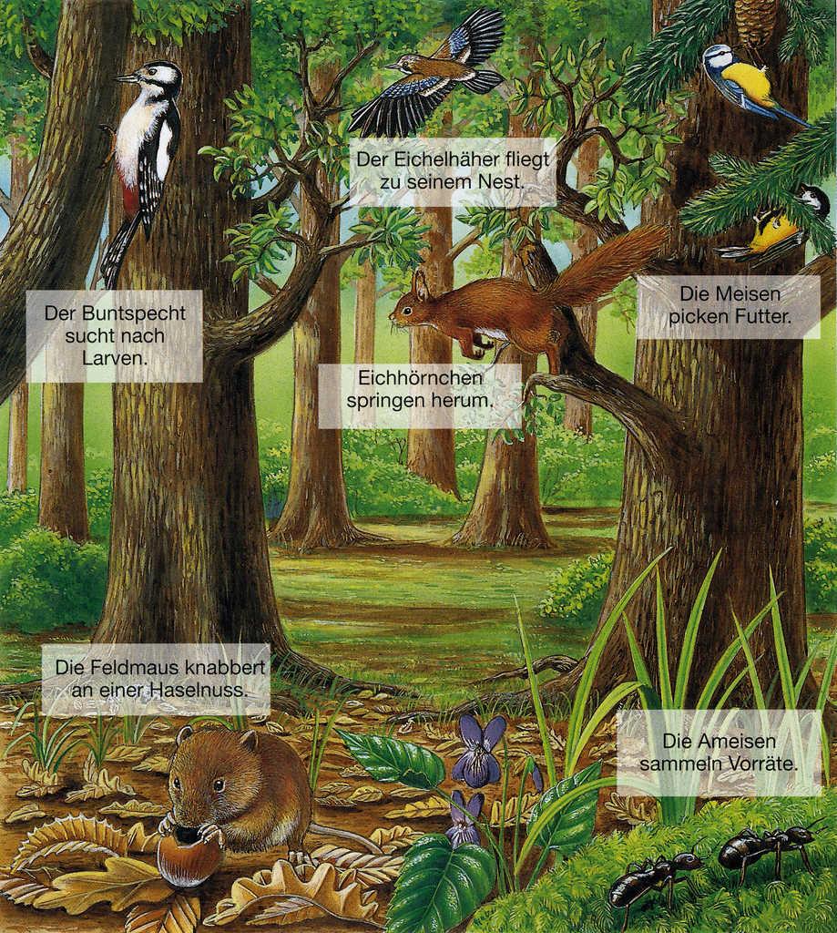 Tiere des Waldes bei Tag