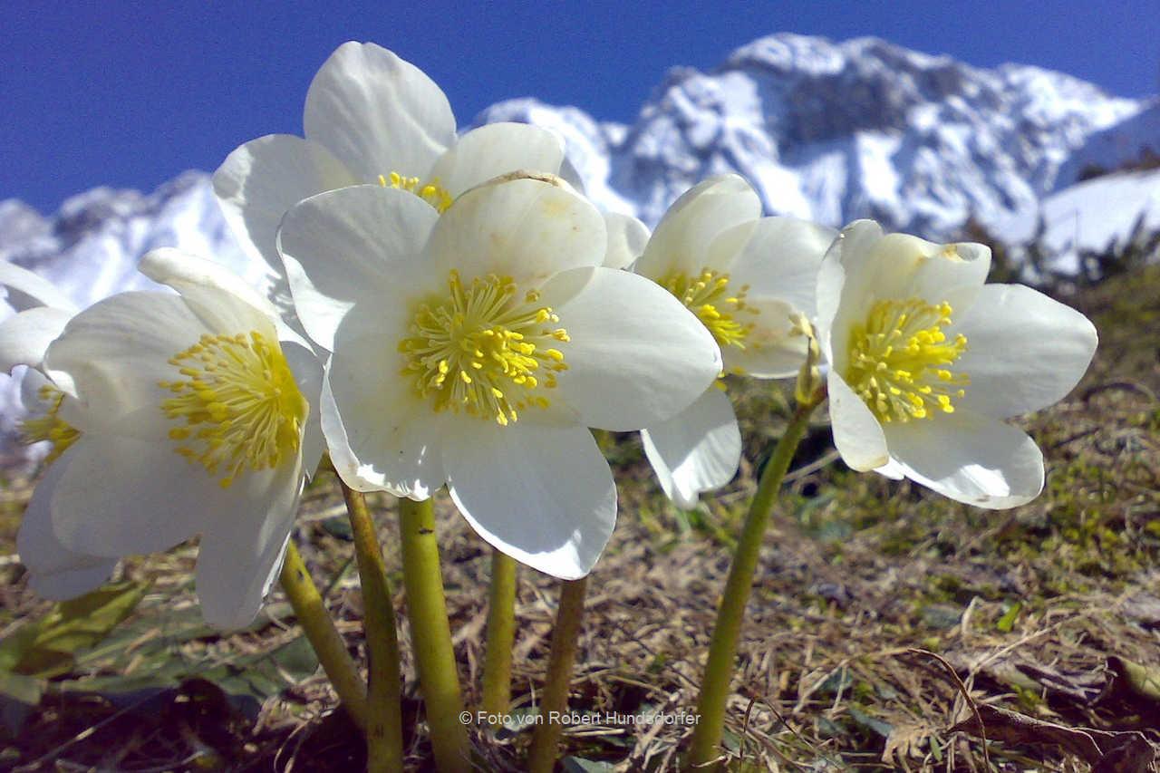 7.) Flora Fauna